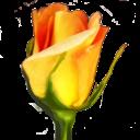 Rosegarden-icon.png